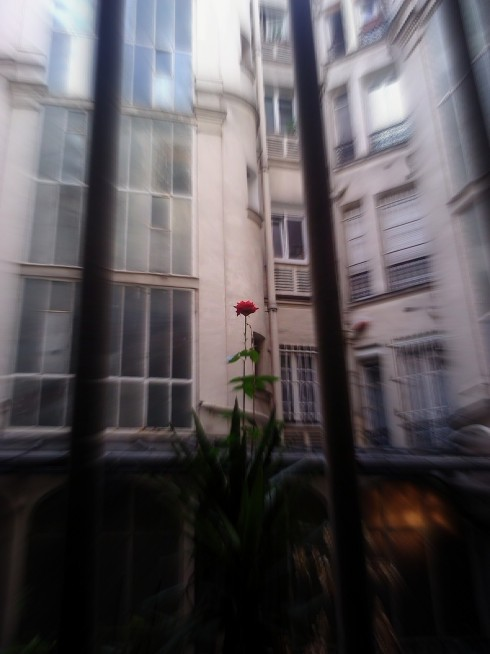 City Rose (Paris)