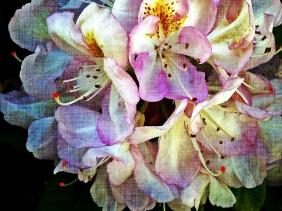 Used 2014-07-19 Mystery flower (Paris Paul Prescott) IMG_20140605_174553bc Used